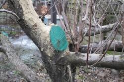 Обработка древесины раствором медного купороса