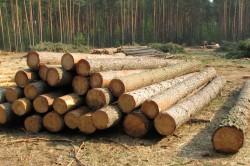 Бревна из хвойных пород древесины